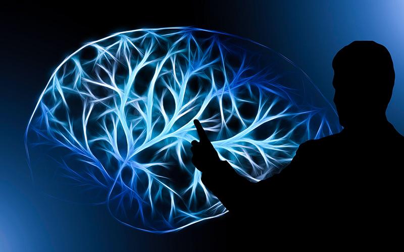 Как сохранить острый ум до старости? Часть 2